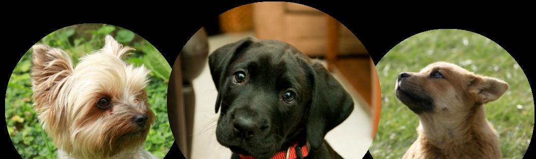 Puppy HQ