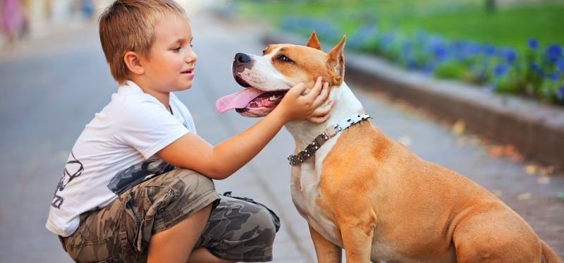 Pit bulls and children