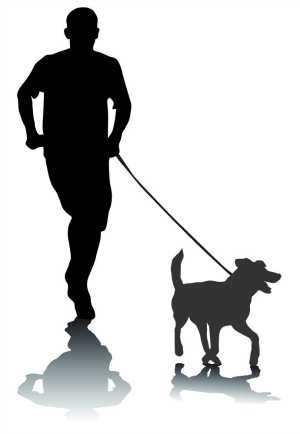 how to walk your dog