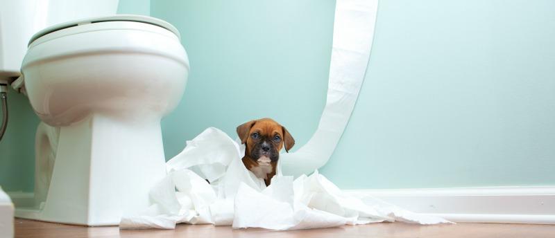 puppy pottie training