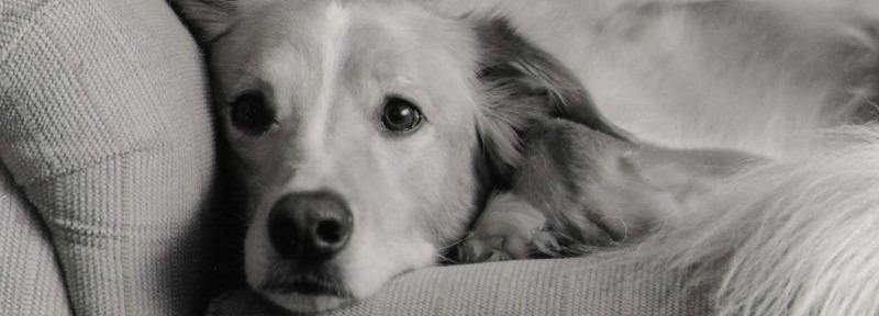 couch-puppy-1518738