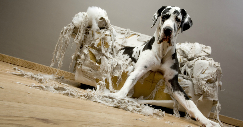 Image result for destructive dog