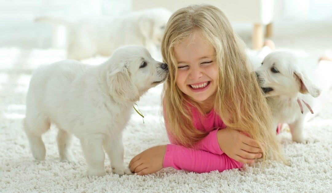 Puppy Socialization Will Save Your Dog's Life