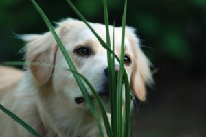smelling grass-small