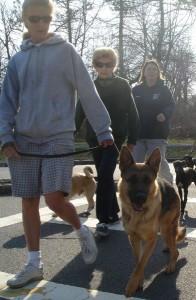 sheppard dog walk
