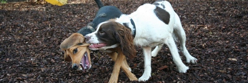 Are Dog Parks Bad For Your Dog?
