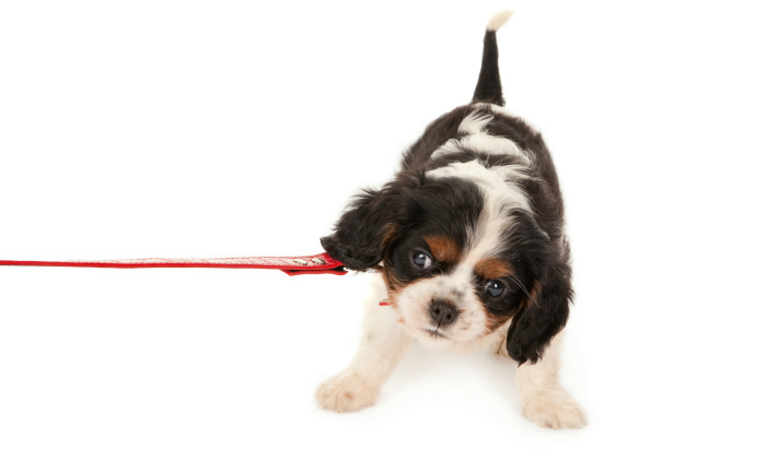 stop leash pulling