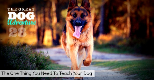 GDA28: The One Thing You Need to Teach Your Dog