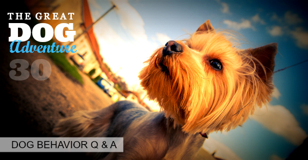 GDA30: Dog Behavior Q & A