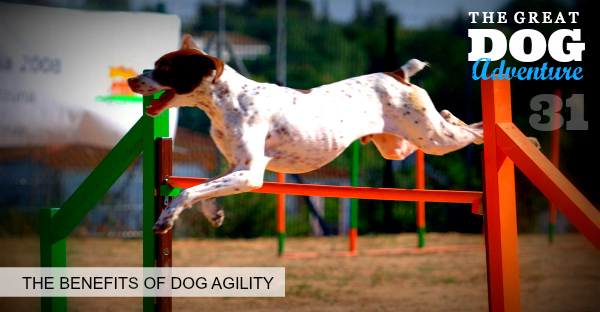 GDA31: The Benefits of Dog Agility