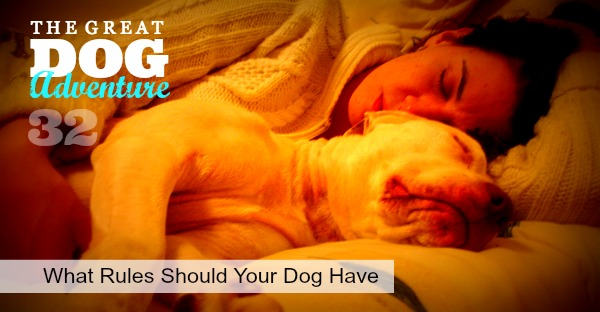 GDA32: What Rules Should Your Dog Have