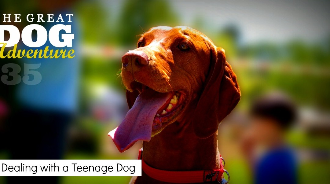 GDA35: Dealing with a Teenage Dog