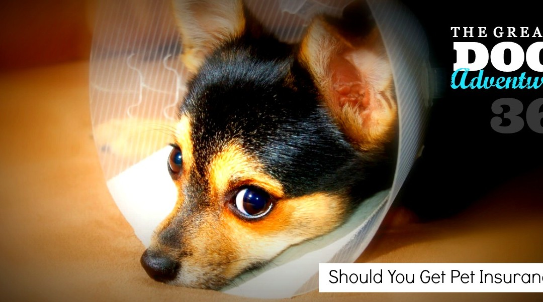 GDA36: Should You Get Pet Insurance?