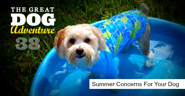 GDA38: Summer Concerns For Your Dog