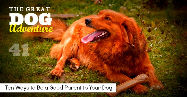 GDA41: 10 Ways To Be a Good Parent To Your Dog
