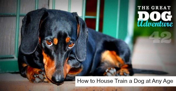 GDA42: How to House Train a Dog at Any Age