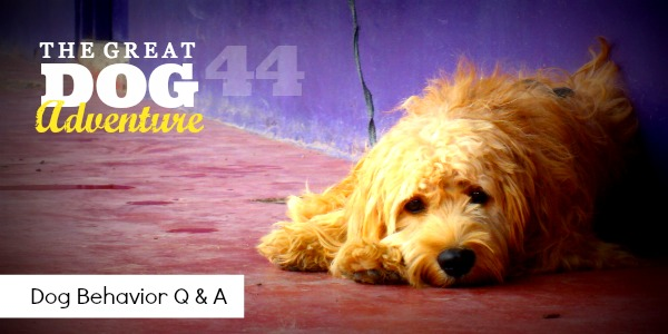 GDA44: Dog Behavior Q & A