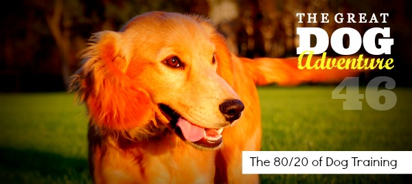 GDA46: The 80 – 20 of Dog Training