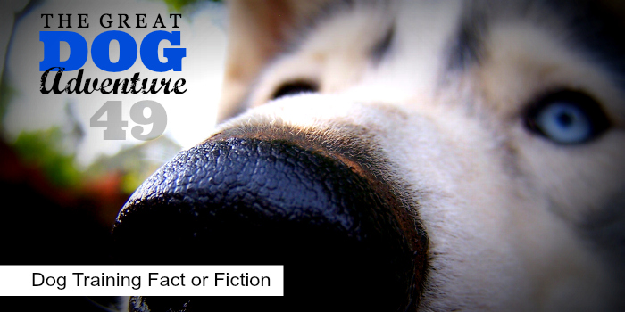 GDA49: Dog Fact or Fiction
