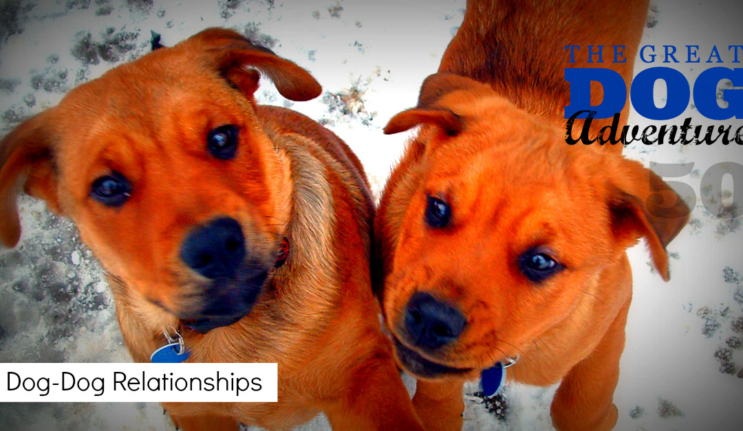 GDA50: Dog-Dog Relationships