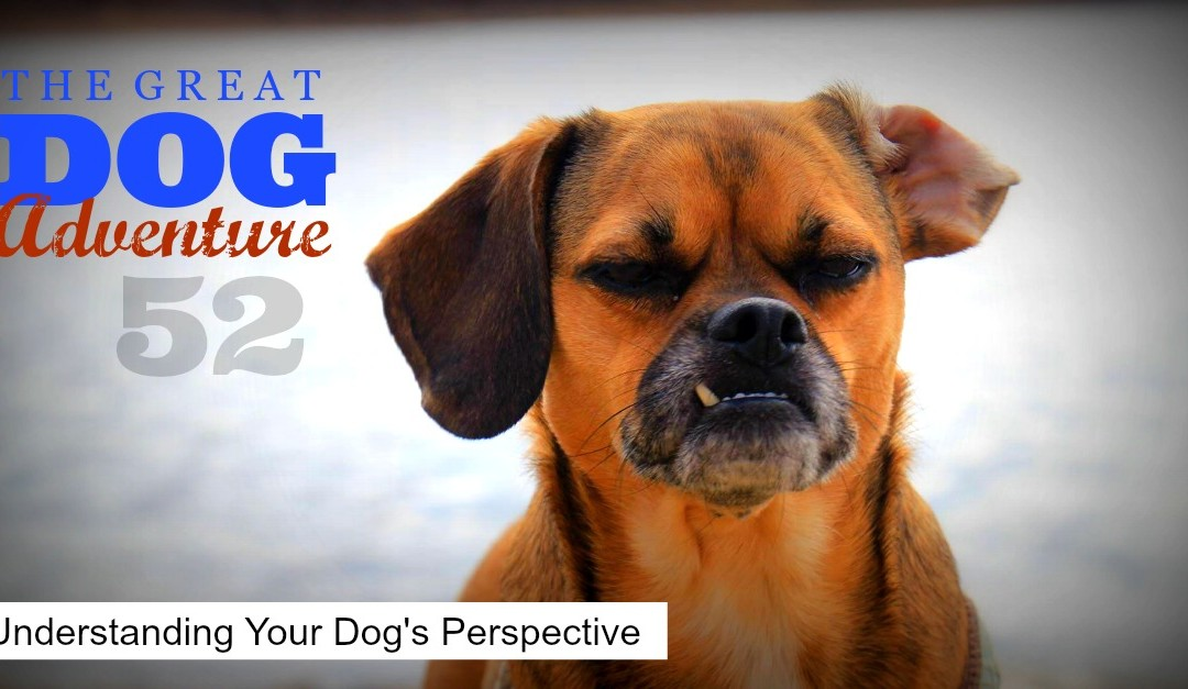 GDA52: Understanding Your Dog's Perspective