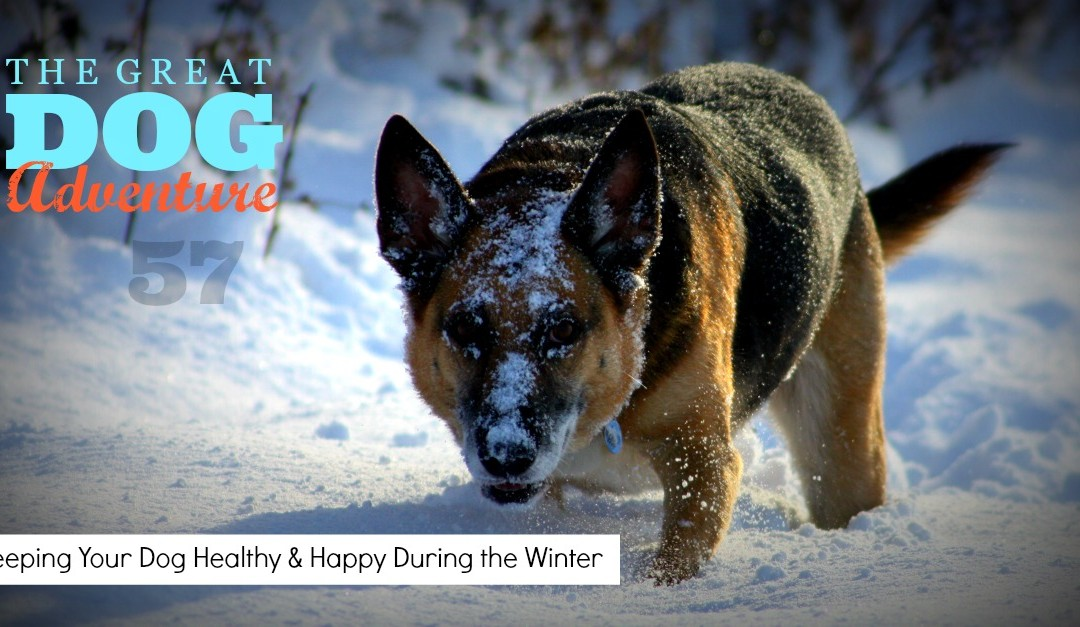 GDA57: Keeping Your Dog Healthy & Happy During the Winter