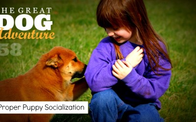 GDA58: Proper Puppy Socialization