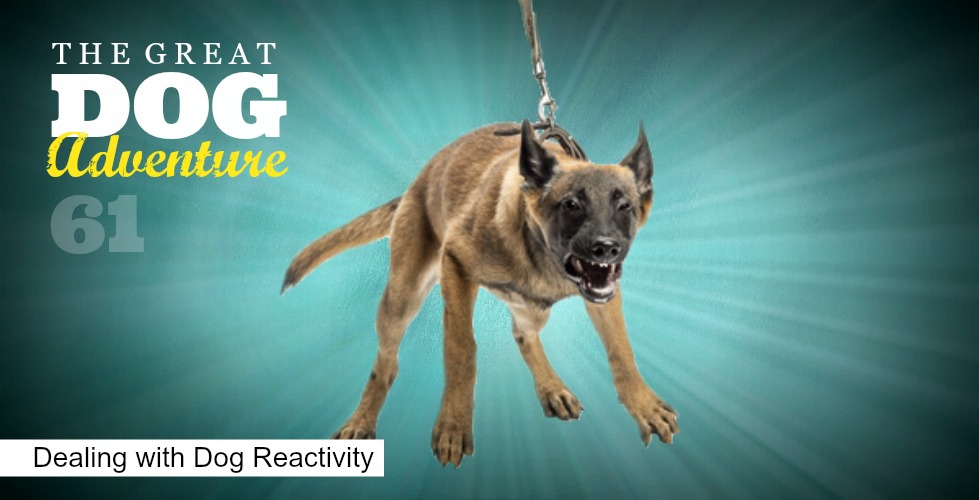 GDA61: Dealing with Leash Reactivity
