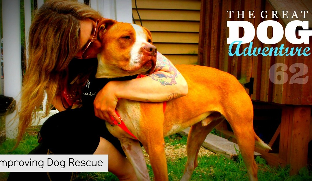 GDA62: Improving Dog Rescue