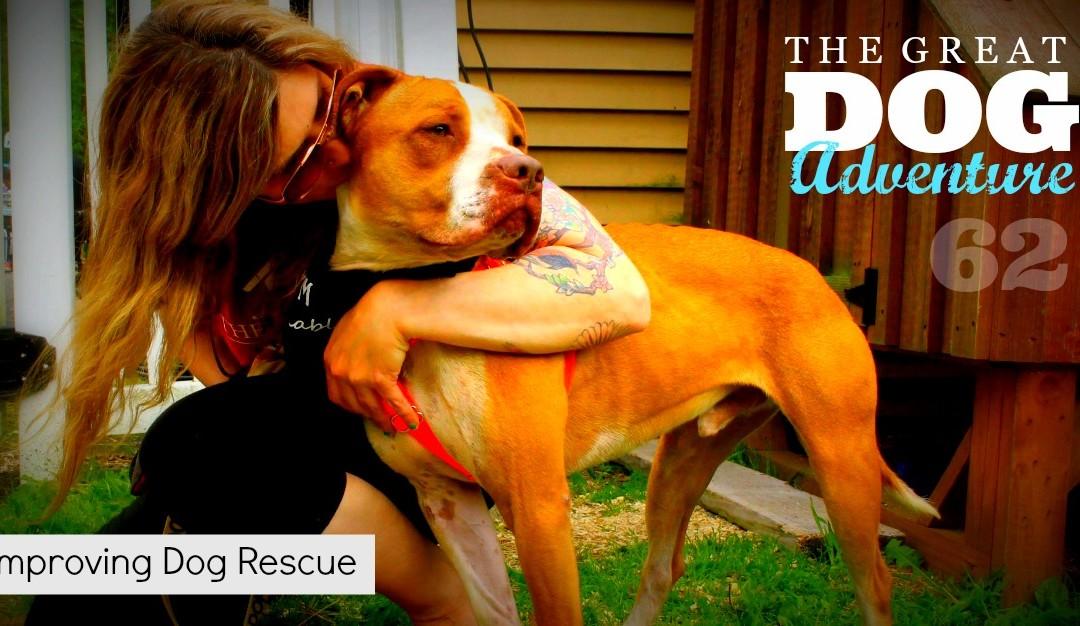 GDA62: Improving Dog Rescue