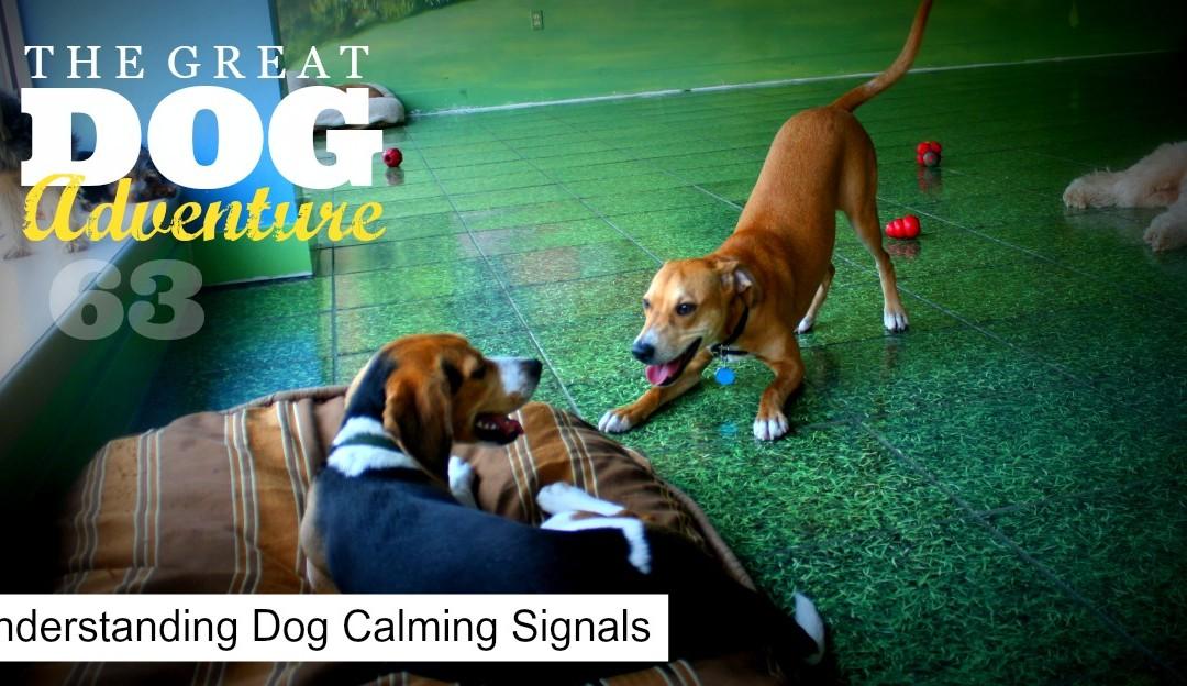 GDA63: Understanding Dog Calming Signals