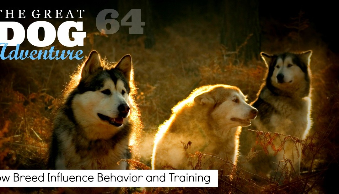 GDA64: How Breed Influence Behavior and Training