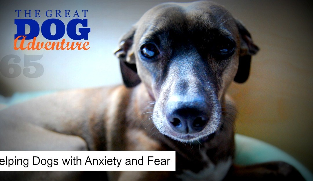 GDA65: Helping Dogs with Anxiety and Fear
