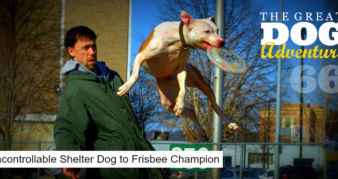 GDA66: Uncontrollable Shelter Dog to Frisbee Champion