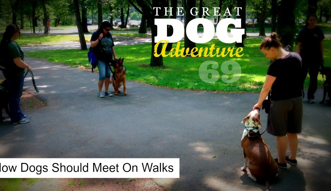 GDA69: How Dogs Should Meet On Walks