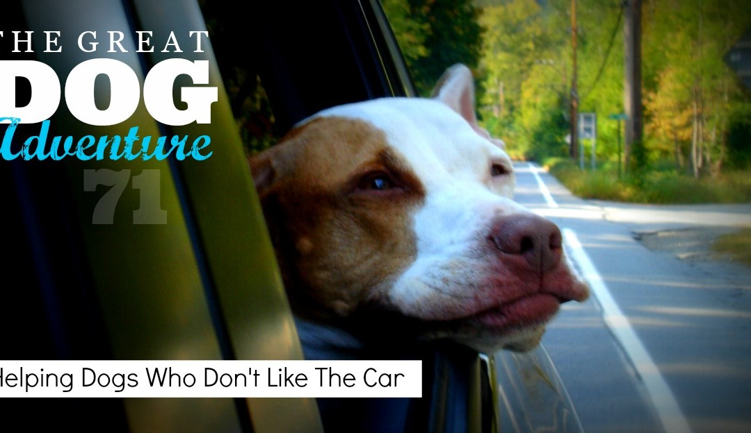 GDA71: Helping Dogs Who Don't Like The Car