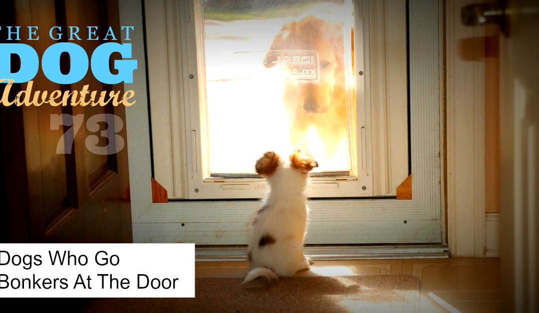 GDA73: Dogs Who Go Bonkers At The Doorbell