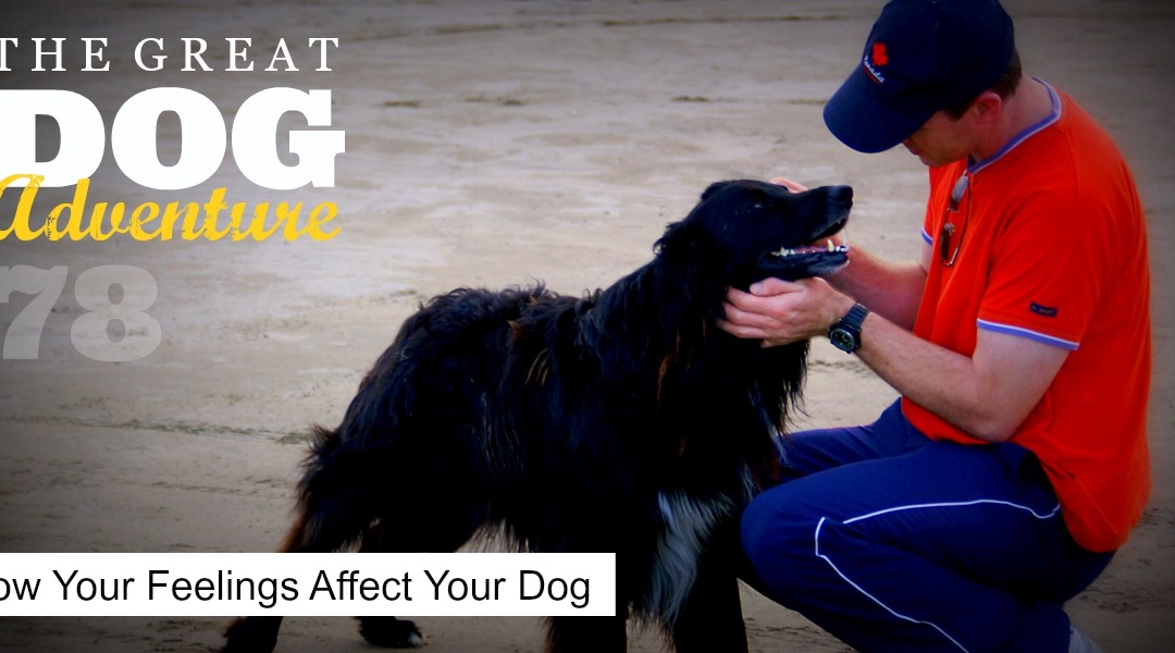 GDA78: How Your Feelings Affect Your Dog