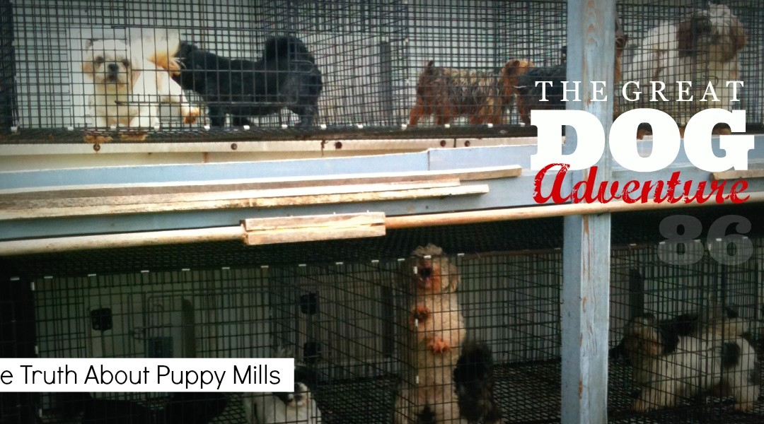 GDA86: The Truth About Puppy Mills