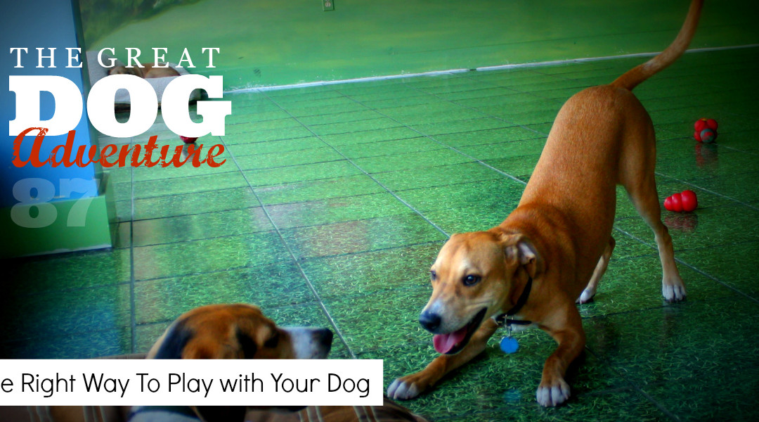 GDA87: The Right Way To Play with Your Dog