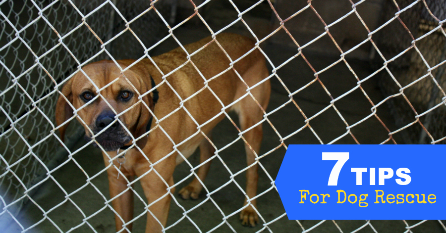7 Tips To Improve Your Dog Rescue Efforts