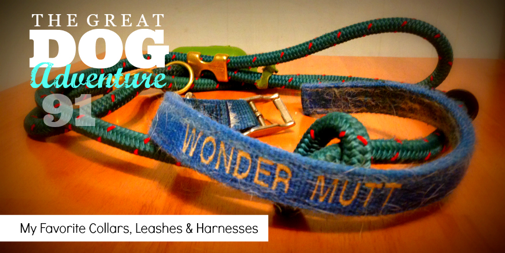 GDA91: Fern's Favorite Things – Collars, Leashes & Harnesses