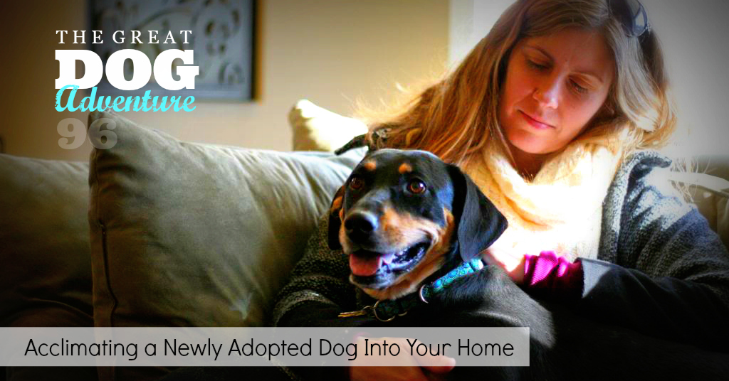 GDA96: Acclimating A Newly Adopted Dog Into Your Home