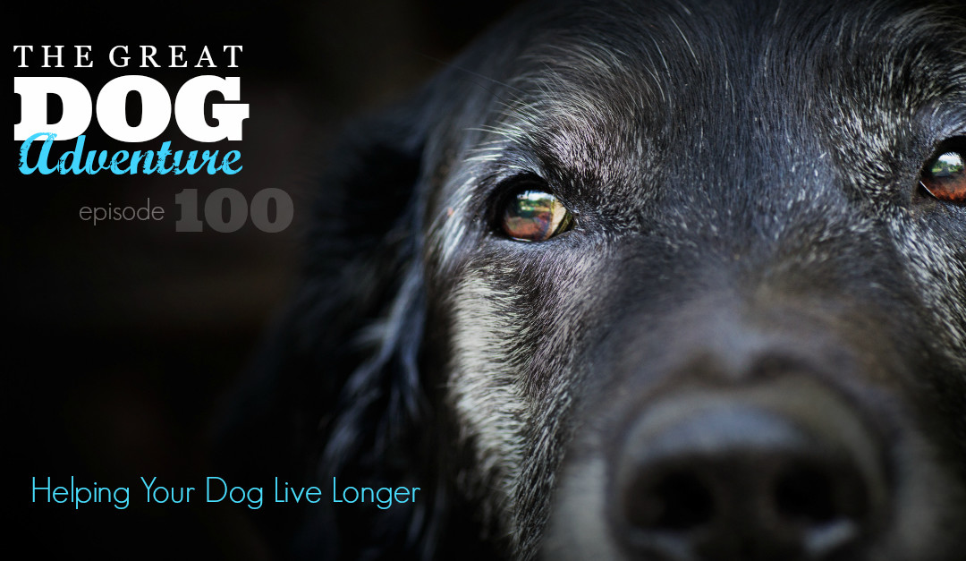 GDA100: Helping Your Dog Live Longer