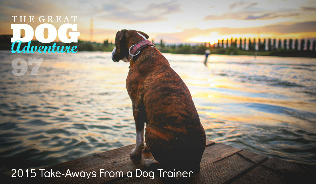 GDA97: 2015 Take-Aways From A Dog Trainer