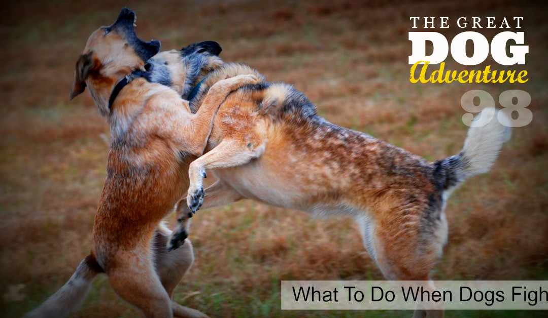 GDA98: What To Do When Dogs Fight