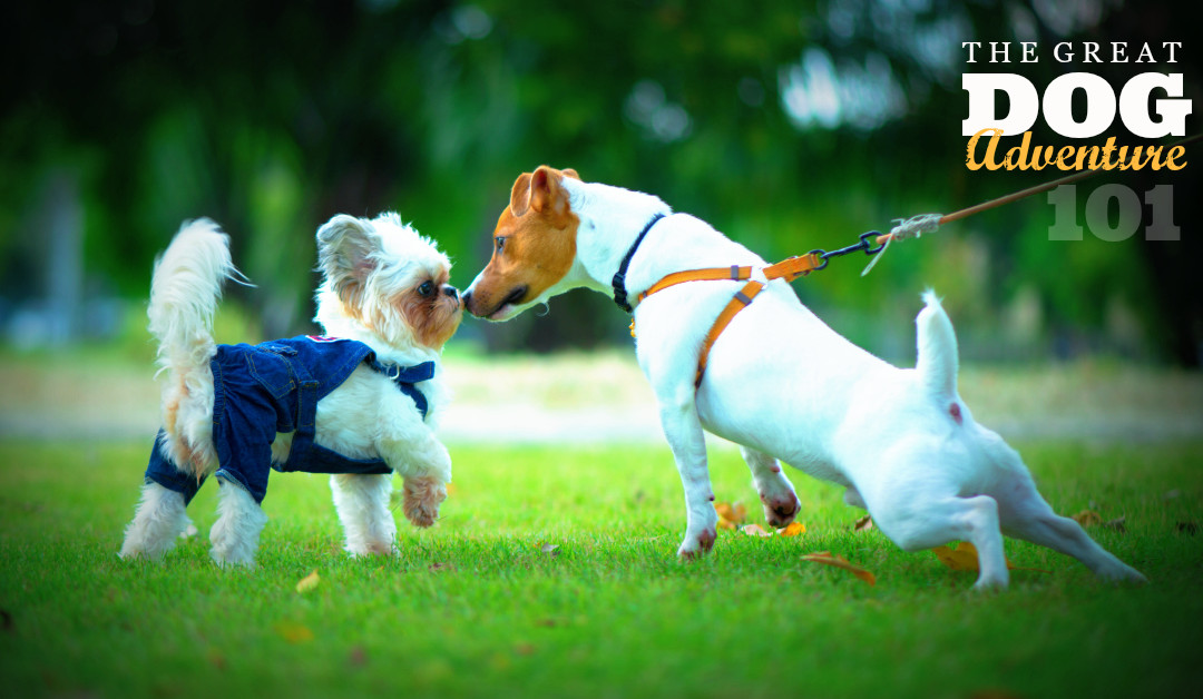 GDA101: Introducing Dogs To Each Other