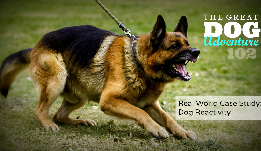 GDA102: Real World Case Study – Dog Reactivity