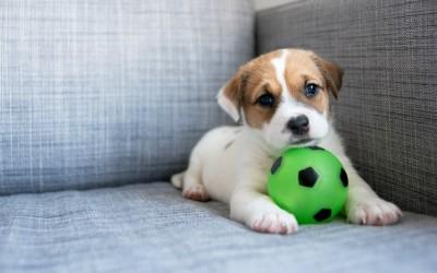 New Puppy Supply List
