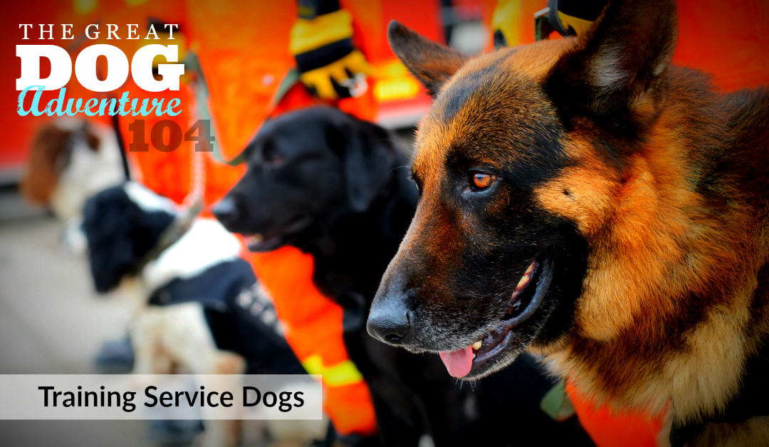GDA104: Training Service Dogs